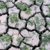 dry parched earth in August